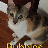 Adopt A Pet :: Bubbles - Covington, KY