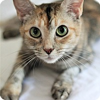 Adopt A Pet :: Frizzle - Chattanooga, TN