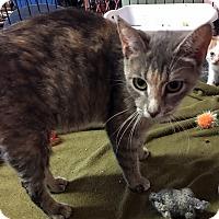 Adopt A Pet :: Nora - Loogootee, IN