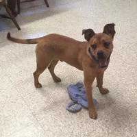 Adopt A Pet :: Ruger - Cashiers, NC