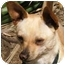 Photo 1 - Chihuahua Mix Dog for adoption in San Diego, California - Jerry