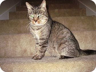 Domestic Shorthair Cat for adoption in Marietta, Georgia - Penelope