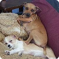 Adopt A Pet :: capri pants - Houston, TX