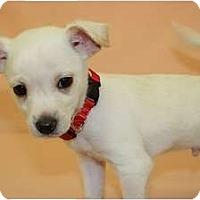 Adopt A Pet :: Garlic - Broomfield, CO