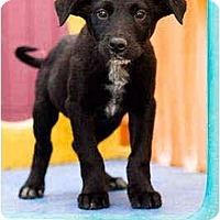 Adopt A Pet :: Nigel - Portland, OR