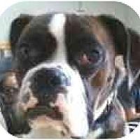 Adopt A Pet :: CAPTAIN - North Haven, CT