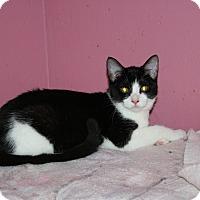 Adopt A Pet :: Sandra - Santa Rosa, CA