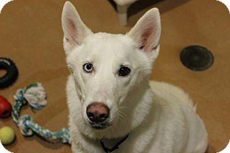 Husky Dog for adoption in Chicago, Illinois - Demitria