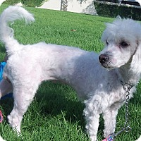 Adopt A Pet :: Penelope-WATCH MY VIDEO!!!! - Irvine, CA