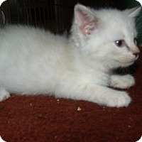 Adopt A Pet :: BERT - Acme, PA