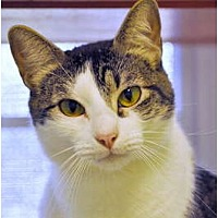 Adopt A Pet :: Squirt - Carencro, LA