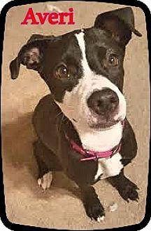 Terrier (Unknown Type, Medium) Mix Dog for adoption in Ahoskie, North Carolina - Averi
