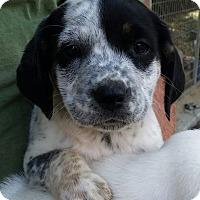 Adopt A Pet :: Beaver - Gainesville, FL