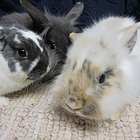Adopt A Pet :: Teegan, Misty & Mira - Newport, DE