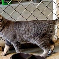 Adopt A Pet :: Carmela - Holly Springs, MS