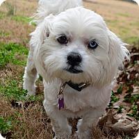 Adopt A Pet :: *Montgomery - PENDING - Westport, CT