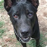 Adopt A Pet :: Krieger - Sylacauga, AL
