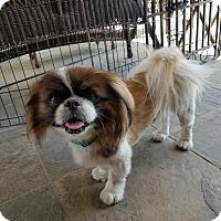 Adopt A Pet :: Wally - San Dimas, CA