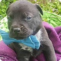 Adopt A Pet :: Remy - Hartford, CT