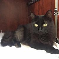 Adopt A Pet :: Dobby - Chandler, AZ