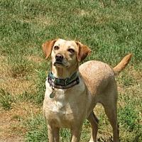 Adopt A Pet :: Gypsy - Gilbertsville, PA