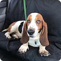 Adopt A Pet :: Ralph - Columbia, SC