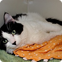 Adopt A Pet :: Speckles - Duluth, MN