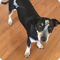 Adopt A Pet :: Lorreta - Bakersfield, CA