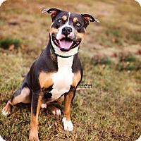 Adopt A Pet :: Luther - Marietta, GA