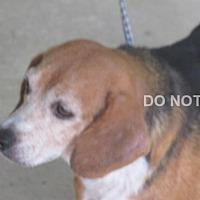 Adopt A Pet :: Faelynn - Rocky Mount, NC