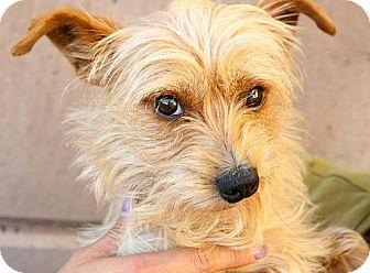 Dachshund Mix Dog for adoption in Berkeley, California - Marble