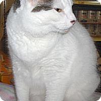 Adopt A Pet :: Cypress - Richmond, VA