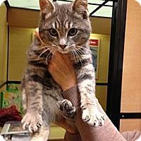 Adopt A Pet :: Boogy Bug - Modesto, CA
