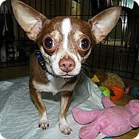 Adopt A Pet :: Diego - Mt Gretna, PA