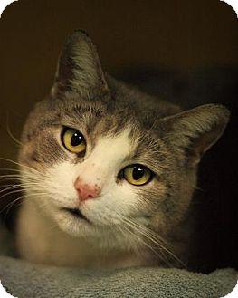 Domestic Mediumhair Cat for adoption in Parma, Ohio - Tammy