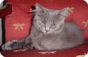 Domestic Shorthair Cat for adoption in Wakefield, Massachusetts - Magilla