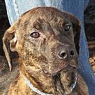 Adopt A Pet :: Teddi