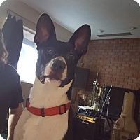 Adopt A Pet :: KAYLIE (Courtesy List) - San Pedro, CA