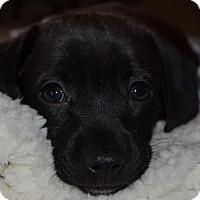 Adopt A Pet :: Faith - North Brunswick, NJ