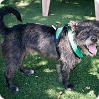 Adopt A Pet :: Drifter - Lakeland, FL