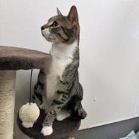 Adopt A Pet :: Virgil - Ridgely, MD