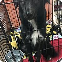 Adopt A Pet :: Chatham - Centerville, GA