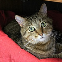 Adopt A Pet :: Sammy - Martinsville, IN