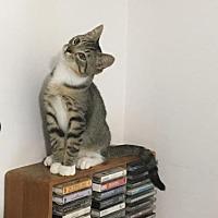 Adopt A Pet :: Ferguson - Capshaw, AL