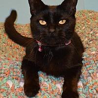 Adopt A Pet :: Salina - Cincinnati, OH