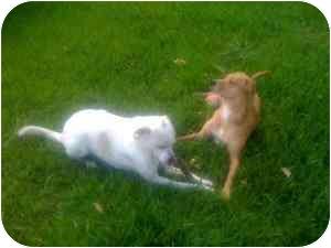 Shepherd (Unknown Type) Mix Dog for adoption in Haughton, Louisiana - Texas and Baylee