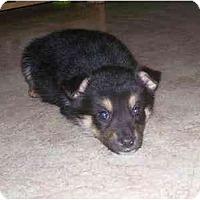 Adopt A Pet :: Balto - Evansville, IN