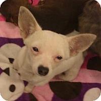 Adopt A Pet :: Tatyana - Phoenix, AZ