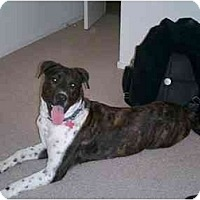 Adopt A Pet :: Amadeus - Scottsdale, AZ