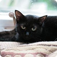 Adopt A Pet :: Jade - Raleigh, NC